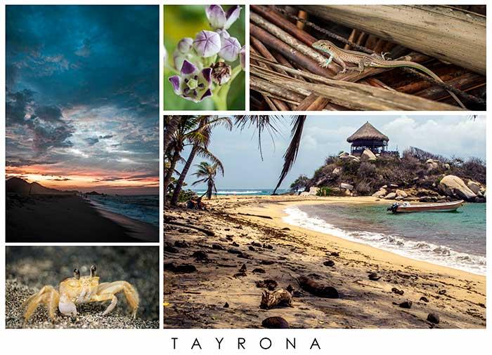 Collage fotos tayrona