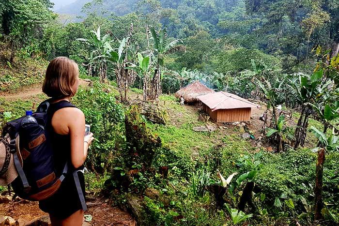 Foto tayrona selva
