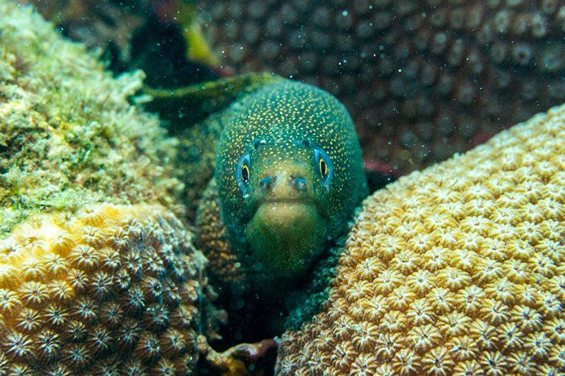 Foto pez exotico tangaga