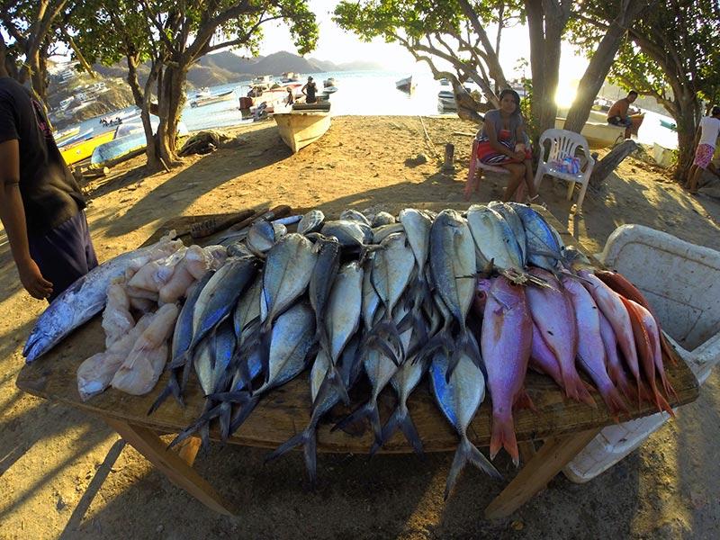 venta de pescados e Taganga