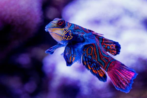 blue_fish_ocean